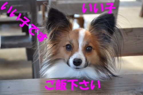 7_20121106110301.jpg