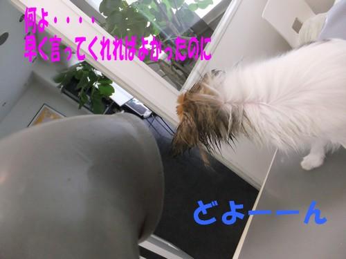 7_20121113085523.jpg