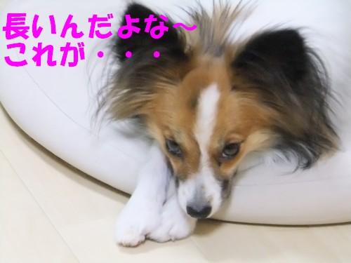 7_20121116091741.jpg