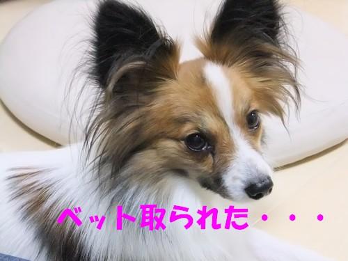 7_20121203173639.jpg