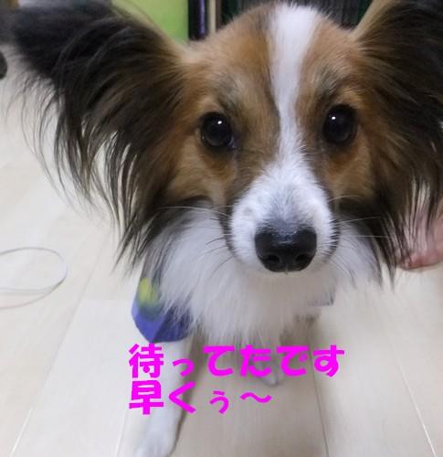 8_20120828213744.jpg