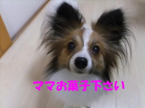 8_20130113202020.jpg