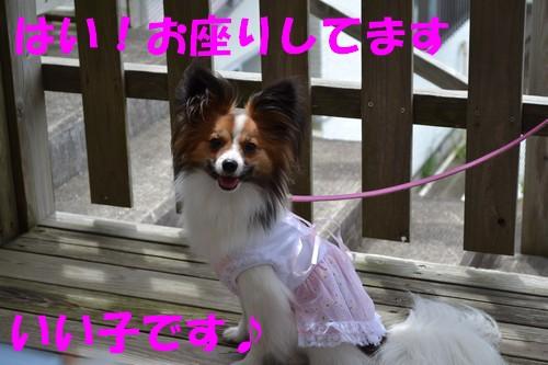 9_20120904112620.jpg