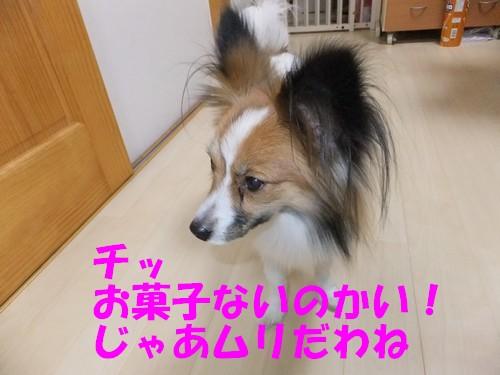 9_20130113202020.jpg