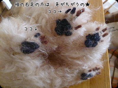 DSC_0371t.jpg