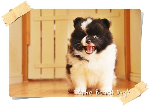 2012-04-02ブラック&ホワイト男の子5-005