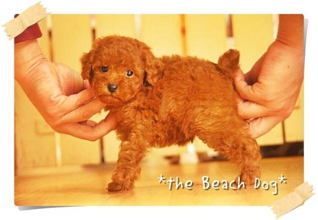 2012-11-16レッド女の子4-009