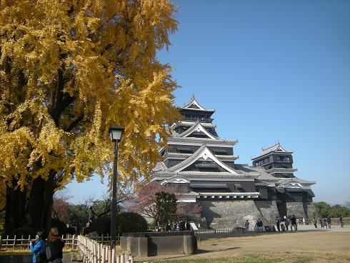 悠然と立つ銀杏の木