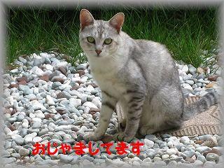 IMG_6556.jpg