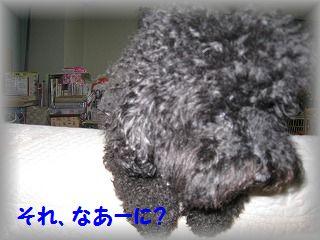 IMG_6622_20120911182444.jpg