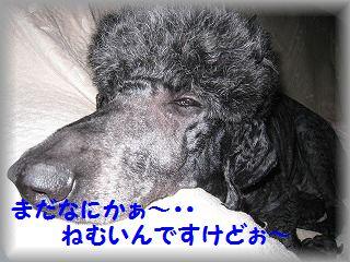 IMG_6658.jpg