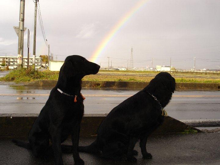 04) 朝方この時期珍しい虹が・・