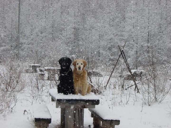05) 2004 04 04 ペリーと一緒に遅い雪