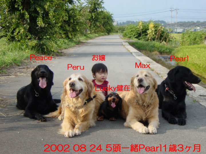 03) 2002 08 24 5頭一緒Pearl1歳3ヶ月