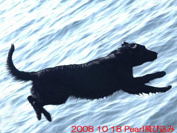 10) 2008 10 18 Pearl飛び込み