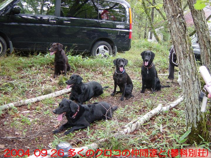 07) 2004 09 26 多くのクロコの仲間達と(蓼科別荘)