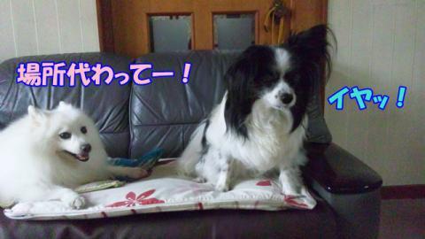 PHOTO769.jpg