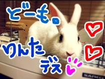 fc2blog_20121031072316183.jpg
