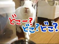 fc2blog_201210310725481ea.jpg