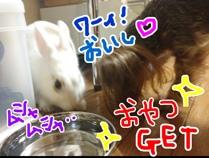 fc2blog_20121031072952dbf.jpg