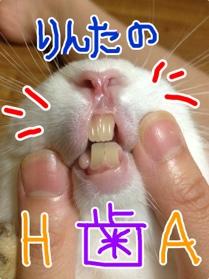 fc2blog_20121102045854c83.jpg