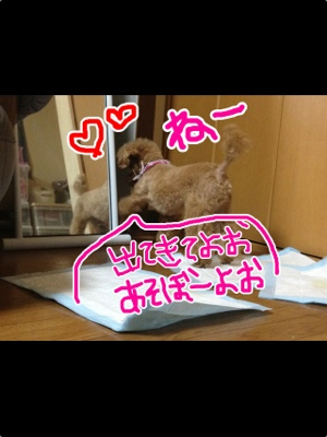 fc2blog_20121117051008e5b.jpg