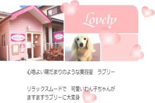 lovelytop101.jpg