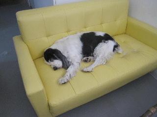 sofa-2.jpg