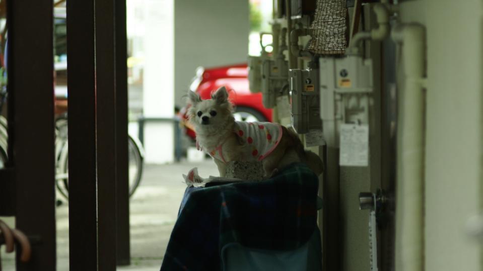 クッソ下品な子犬