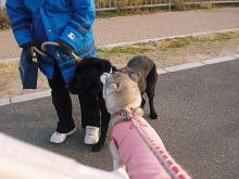 レイン&ラトのお散歩だ~い好き