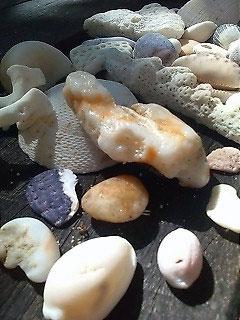 ノーマンビー島の貝殻や珊瑚の死骸