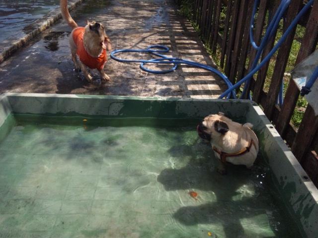 プールでまったり