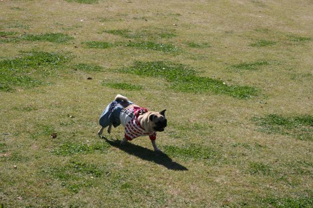 ミニ名犬牧場2