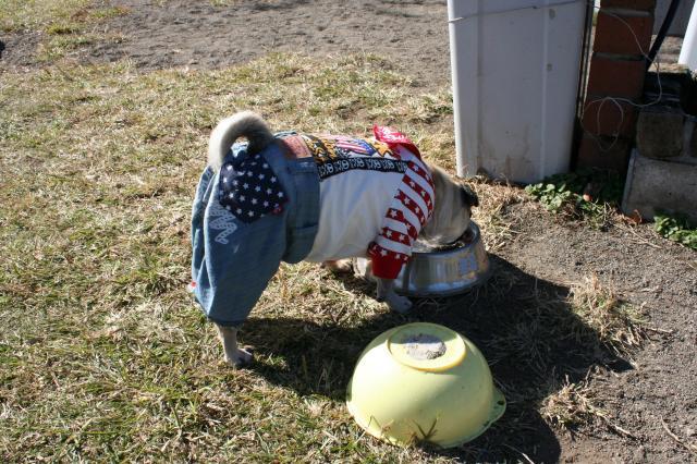 ミニ名犬牧場5