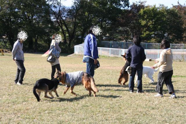 ミニ名犬牧場7