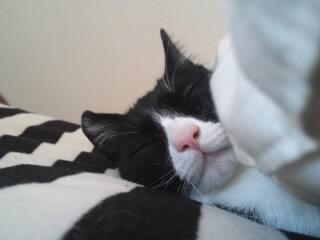 寝るときは枕と布団が必須