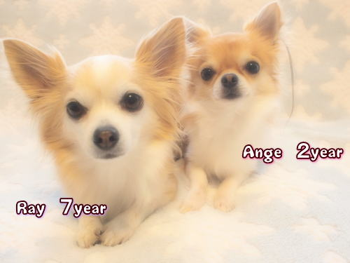 14-02 Ange10