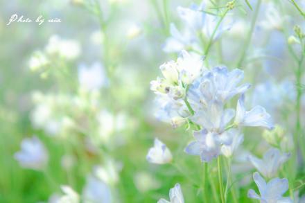 ブログ用IMG_9150_R