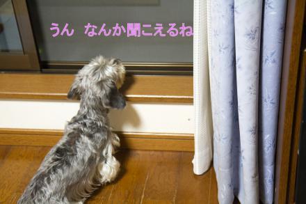 ブログ用IMG_0887