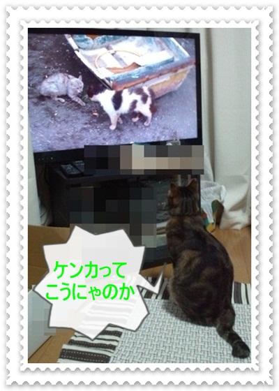 猫とネコ4