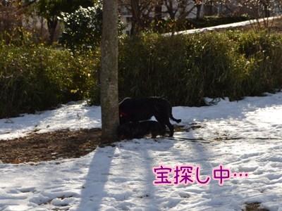 2013散歩初め1
