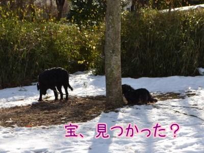 2013散歩初め2