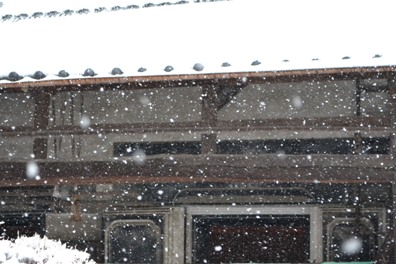 雪だけど4