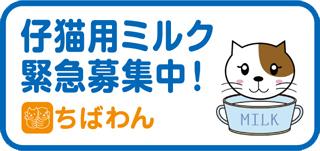 仔猫ミルク