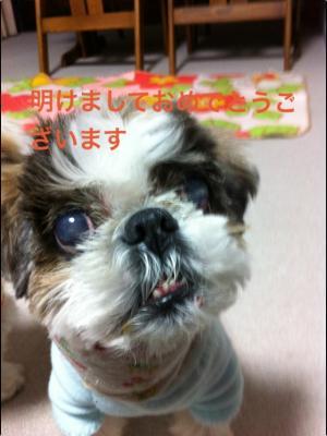 IMG_3941_convert_20130101222128.jpg