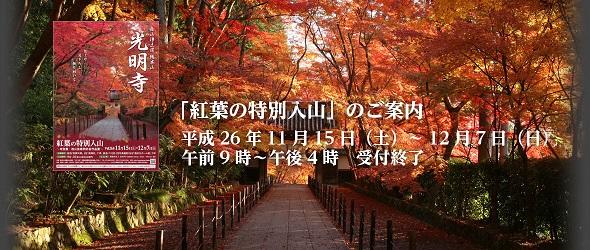 koyo1112.jpg