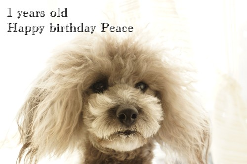 ぴっちゅ、お誕生日おめでとう