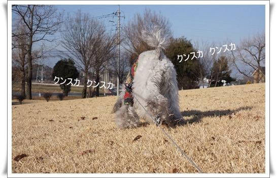 DSC03363-1.jpg