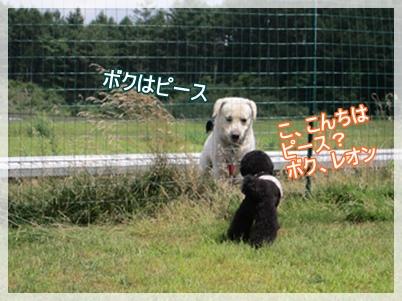 IMG_0956-1.jpg