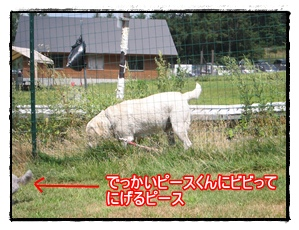 IMG_0957-1.jpg